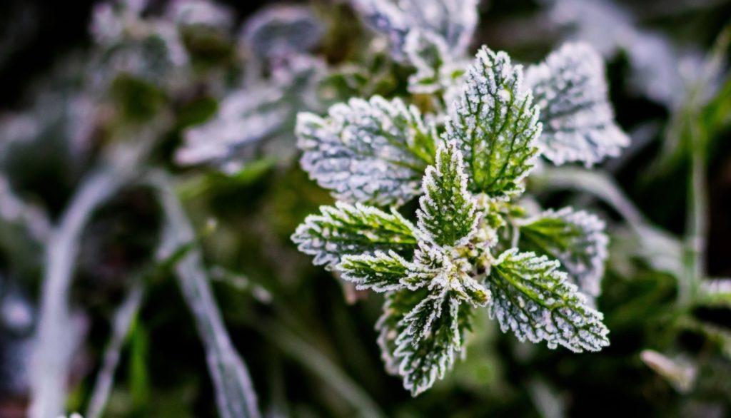 Frío y Escarcha de Invierno DMD Fotografía Dest